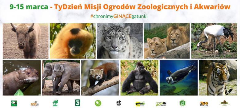 TyDzień Misji Ogrodów Zoologicznych. W Bydgoszczy to żubr przypomni, po co jest współczesne zoo
