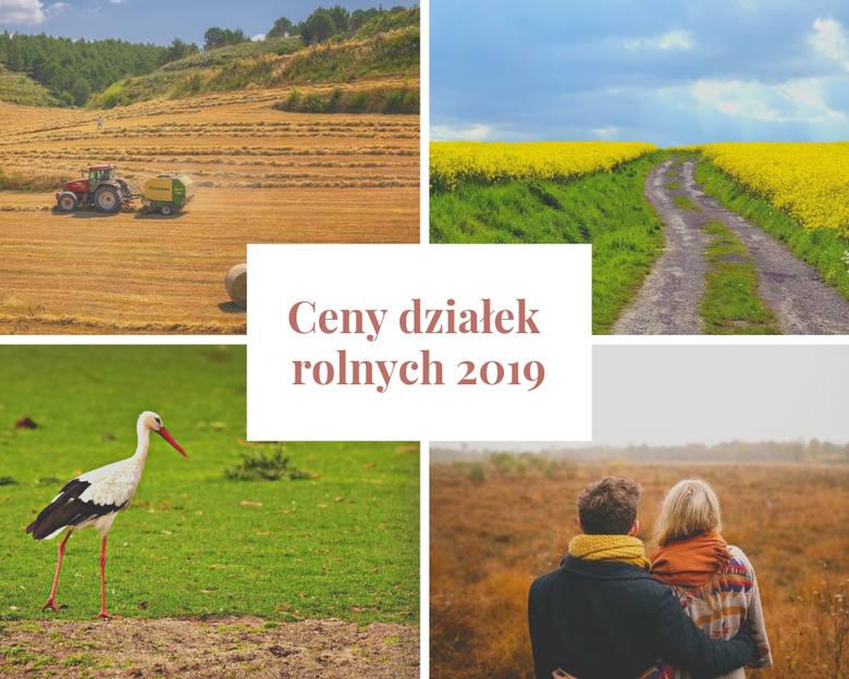 Działka o powierzchni 3,01 ha została wystawiona za 115 tys. zł. Cena ziemi - jej średnia w Polsce - co roku, a właściwie z każdym kwartałem - rośnie.