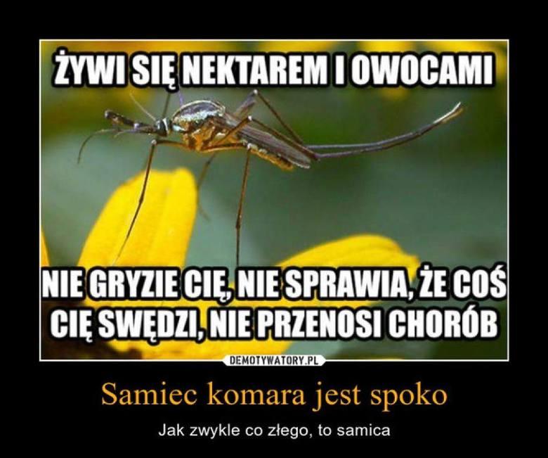 Plaga komarów 2020! Krwiopijcy atakują stadami nie tylko w całym Lubuskiem. Co robić? Na razie proponujemy trochę humoru
