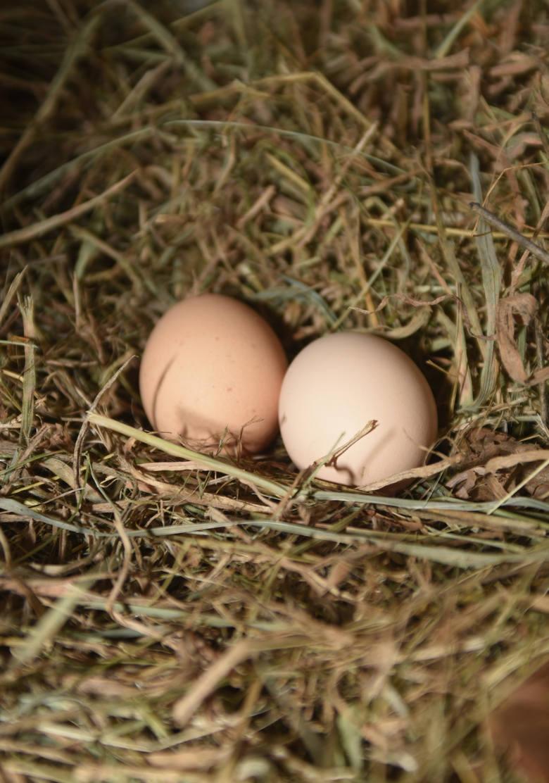 Jajka podnoszą cholesterol, zbyt długo się trawią, obciążają żołądek, dodają nam parę kilogramów, a do tego jeszcze ta mrożąca krew w żyłach salmonella…