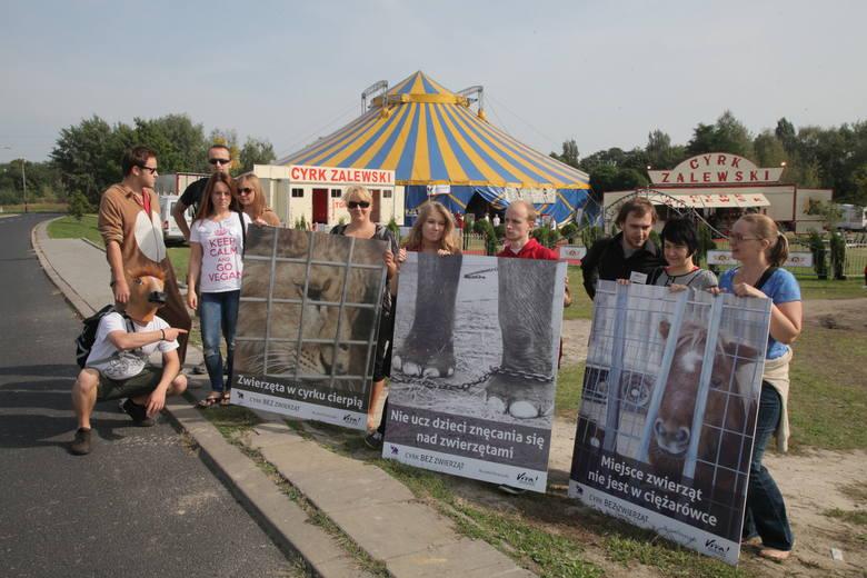We wrześniu Fundacja Viva! pikietowała przed namiotem Cyrku Zalewski w Łodzi
