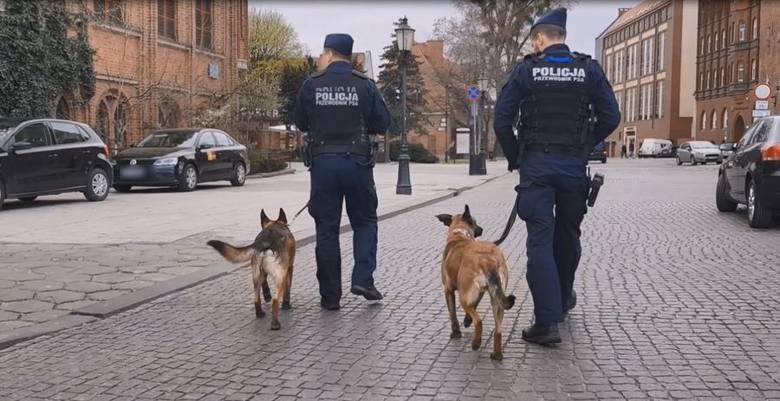Międzynarodowy Dzień Psa 01.07.2020 r. To nie tylko wierni przyjaciele. Te psy policyjne pomagają ratować ludzkie życie! [zdjęcia, film]