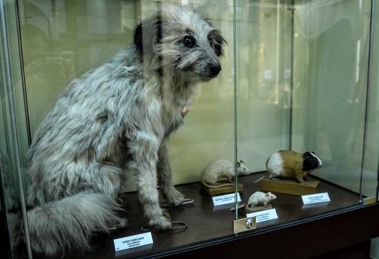 Odkrywamy tajemnice muzeum, w którym sarna stoi obok wilka