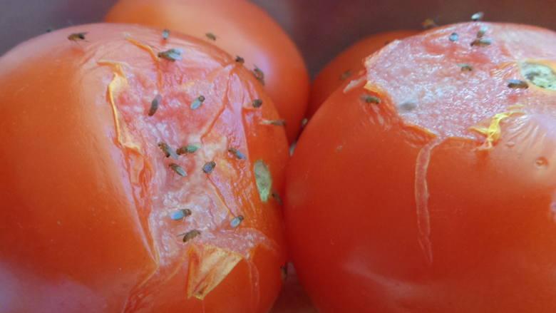 """Muszki owocowe pojawiają się """"znikąd"""" i kolonizują nasze kuchnie. Jak się ich pozbyć? CZYTAJ NA KOLEJNYCH SLAJDACH"""