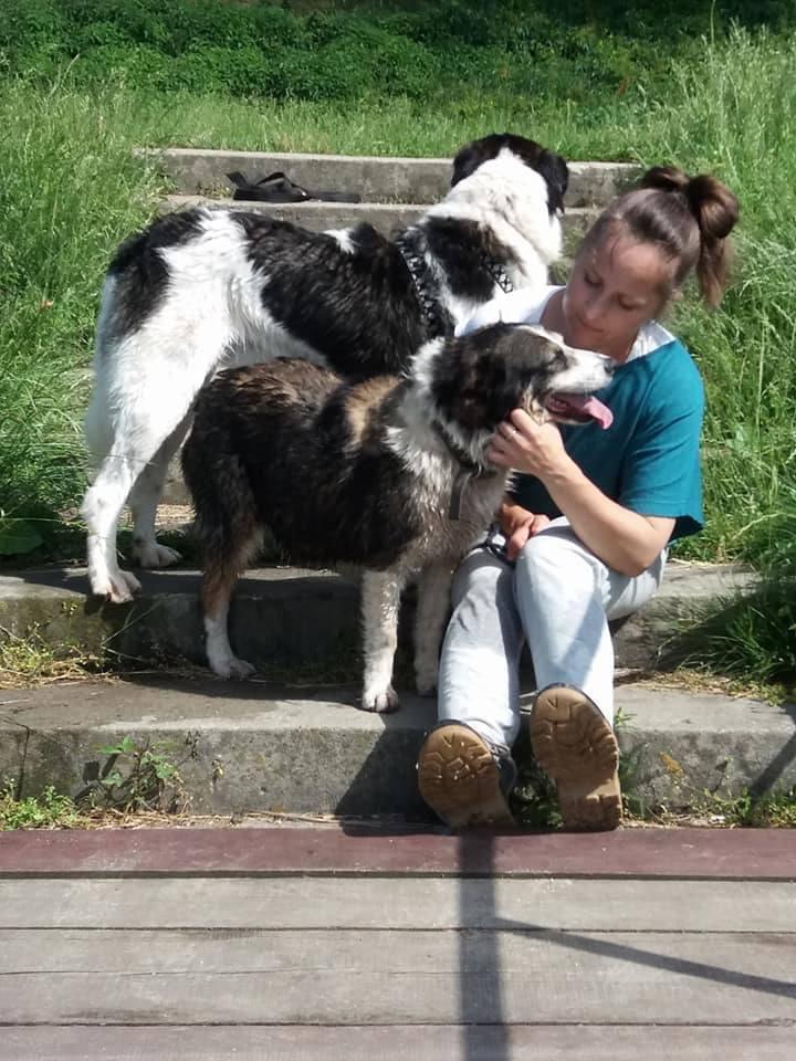 Wiele osób pragnie mieć przyjaciela czworonoga w swoim domu. Nic tylko wybrać się do Schroniska dla Bezdomnych Zwierząt w Skierniewicach, prowadzonego przez Zakład Utrzymania Miasta i wspierane przez Fundację Pomocy Zwierzętom Roka, i po prostu dokonać adopcji. Jest naprawdę w czym wybierać.