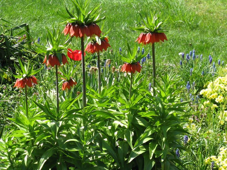 To zdjęcia ogrodu Romana Świerżewskiego
