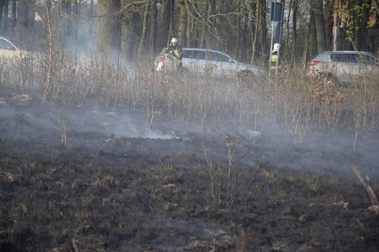Około trzech hektarów lasu paliło się w okolicach Klęśnika między Stołcznem a Gwieździnem