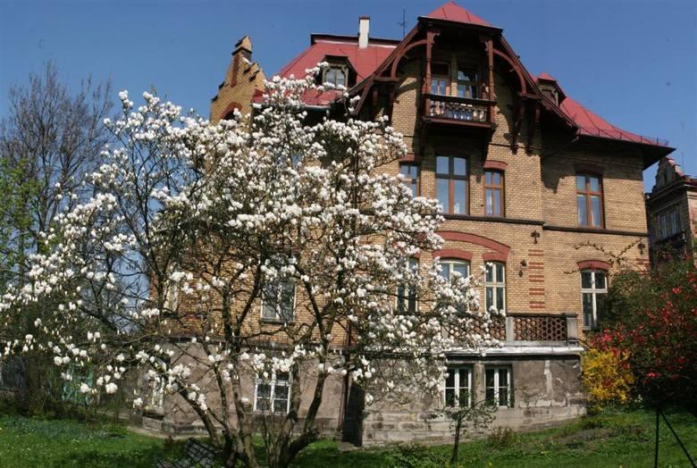 Magnolie na stałe zagościły w cieszynie<br /> - Magnolie tak się mieszkańcom Cieszyna spodobały, że sadzą je w swoich ogrodach. Podobnie robi miasto i spółdzielnie mieszkaniowe - mówi Mariusz Makowski. Faktycznie, coraz więcej krzewów magnolii można zobaczyć przy prywatnych posesjach. Piękne...