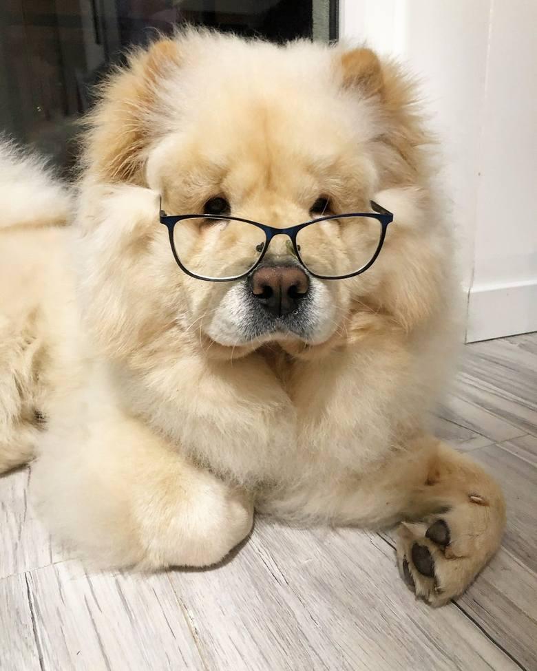 Wybierz z nami zdjęcia psów do kalendarza. Sprawdź liderów i zagłosuj!