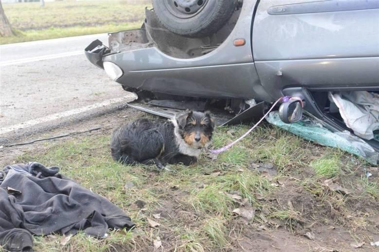 W niedzielę w miejscowości Łuszkowo w powiecie kościańskim doszło do wypadku. Samochód marki Renault prowadzony przez obywatela Ukrainy uderzył w drzewo