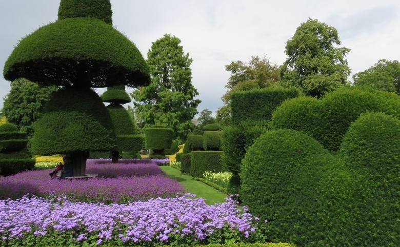 Topiary: formowane krzewy w ogrodzie. Jak to się robi