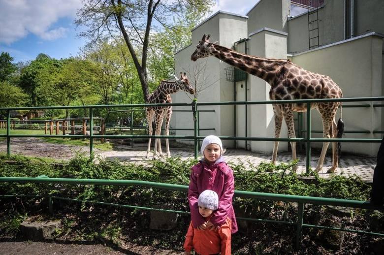 Niedziela w łódzkim ogrodzie zoologicznym [zdjęcia]