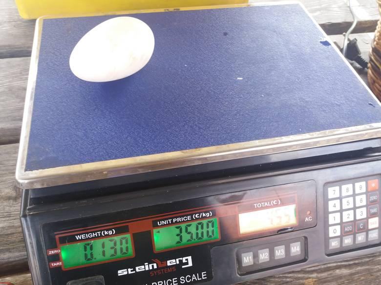 Gęsie jajko - waga 13 gram