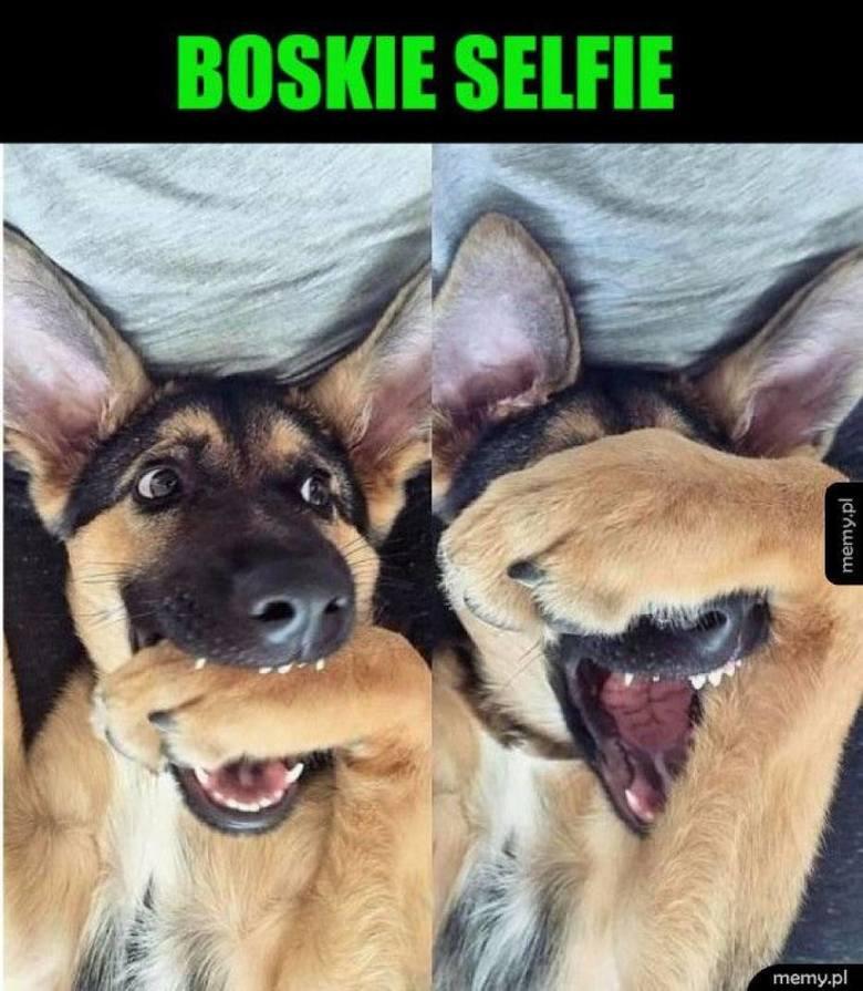 """Dzień Psa 2019: """"Dobry pieseł"""" i oczy mówiące """"dej szynkę"""". Te MEMY rozśmieszą nie tylko właścicieli psów!"""