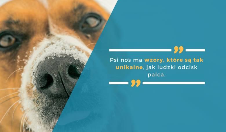 Psi nos ma wzory, które są tak unikalne, jak ludzki odcisk palca.