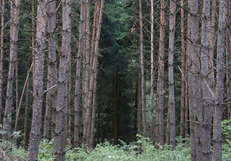 Nawiedzony Las w NowosadachIstnieją plotki, jakoby na Podlasiu miał znajdować się nawiedzony Las Kudra. Znajduje się niedaleko wsi Nowosady k. Zabłudowa,