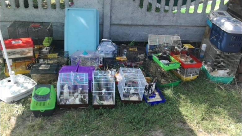 Działacze poszukują teraz chętnych, którzy przygarną odebrane właścicielom zwierzęta. Wszystkie zostały przebadane i odrobaczone.