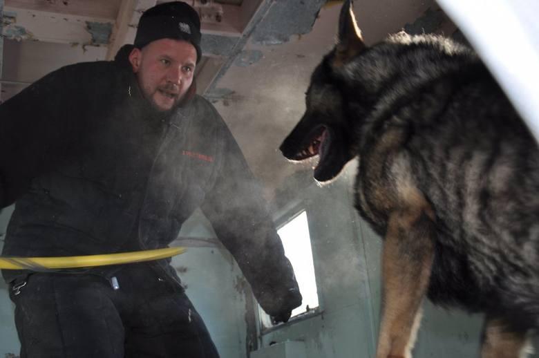 """Funkcjonariusze z całego garnizonu  doskonalili umiejętności swoich psów do zadań """"specjalnych""""."""