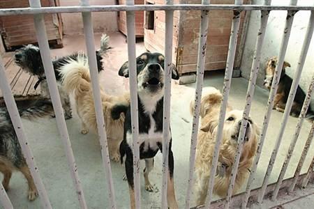 Sądowy spór o pieniądze dla zwierząt