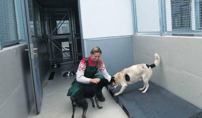 W październiku 2012 roku koszalińskie schronisko dla bezdomnych zwierząt zyskało całkiem nową siedzibę.