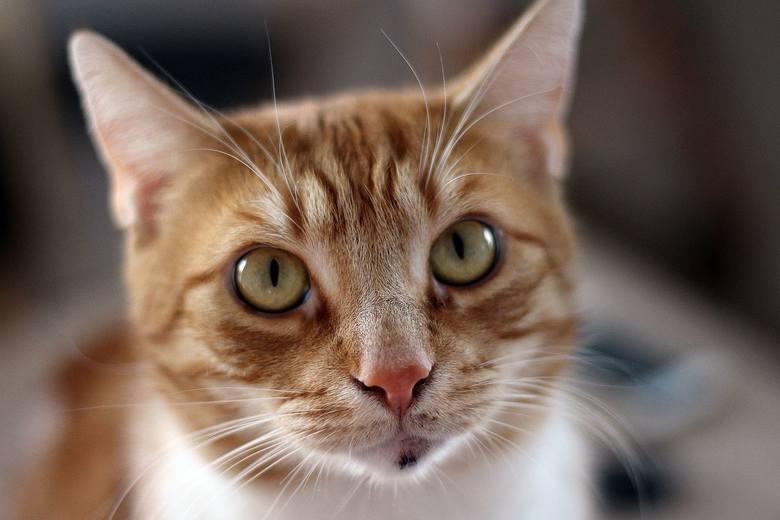 Koty to urocze zwierzęta. Są zabawne, szalone, leniwe, kapryśne… Przymiotników można wymieniać jeszcze wiele. Za co jeszcze je kochamy? Może właśnie