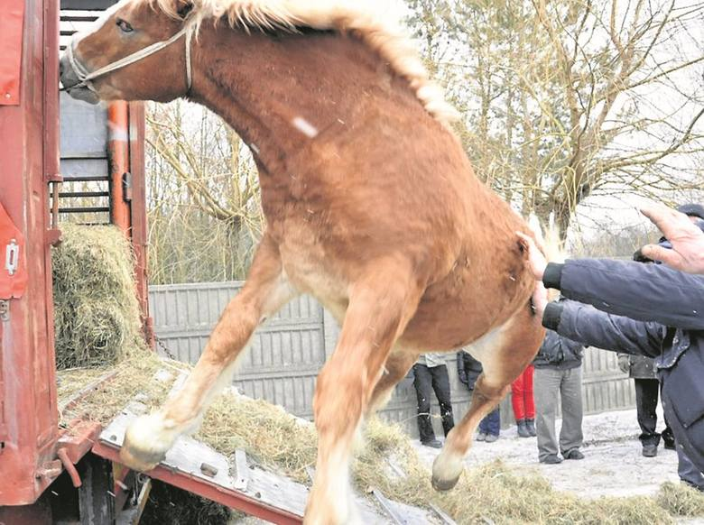 """Akcja. Nie oddawajmy polskich koni na rzeź! """"Stop Skaryszew"""""""