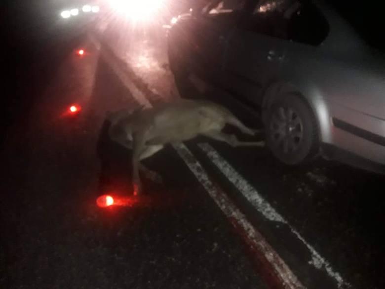 Wypadek Na Dk66 Na Trasie Relacji Patoki Mień Volkswagen