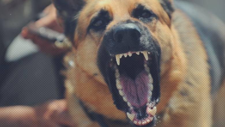 Chcesz kupić psa? Niestety nie każdego możesz tak po prostu wziąć z hodowli. Zgodnie z polskim prawem, decydując się na posiadanie psa lub prowadzenie