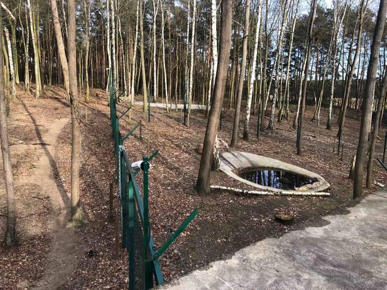 Tak wygląda Nowe Zoo w marcu. Zobacz więcej zdjęć --->