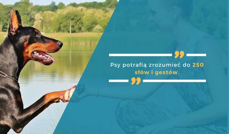 Psy potrafią zrozumieć do 250 słów i gestów.