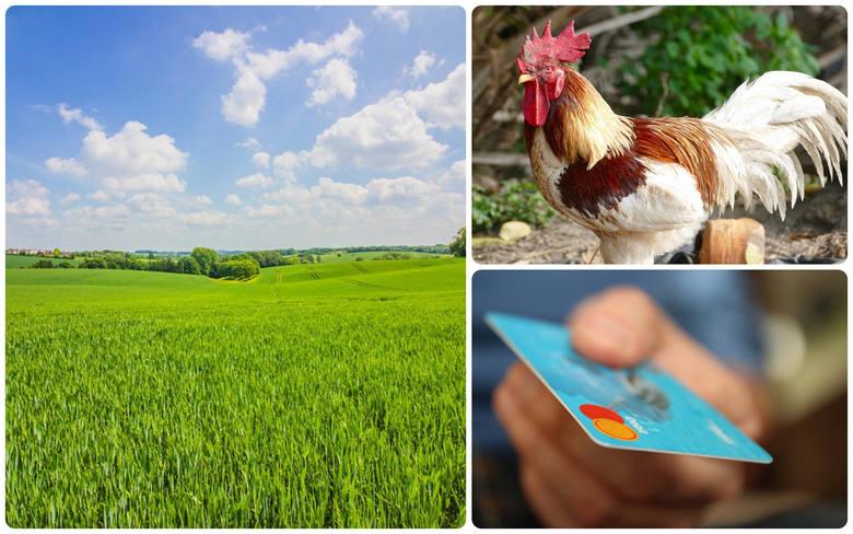 Dochody z gospodarstw rolnych urosły i to o 30% - wyliczają urzędnicy
