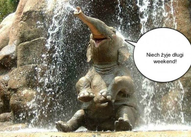 Długi czerwcowy weekend 2021: MEMY. Internauci śmieją się z kilku dni odpoczynku. Najlepsze memy na długi weekend czerwcowy 2021