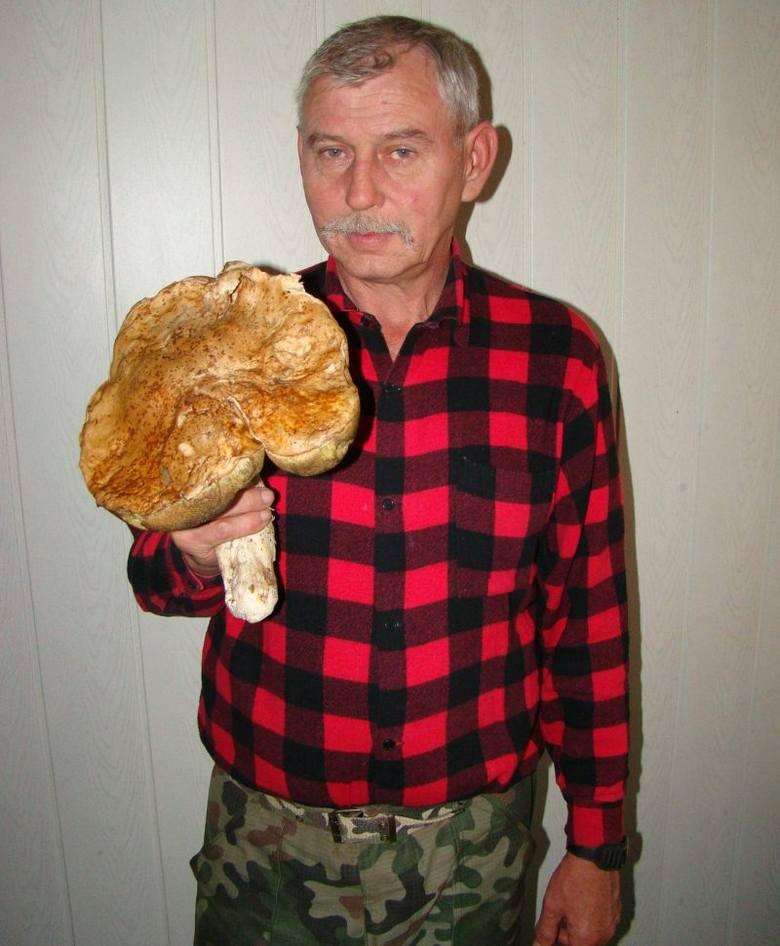 Kapelusz tego borowika szlachetnego znalezionego przez pana Kazimierza miał 72 centymetry obwodu.
