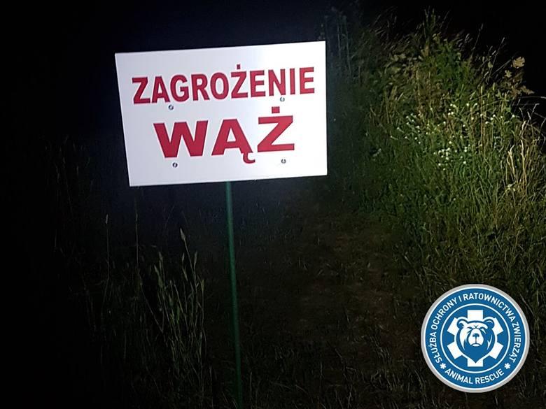 Pyton tygrysi wciąż na wolności. Wąż był widziany w miejscowości Glinki, płynie Wisłą w kierunku Góry Kalwarii. Policja potwierdza