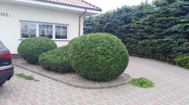 Ogrodnictwo, budownictwo