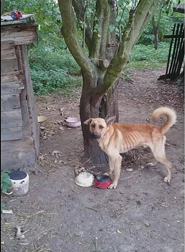 Domek z ogródkiem, a pies na łańcuchu