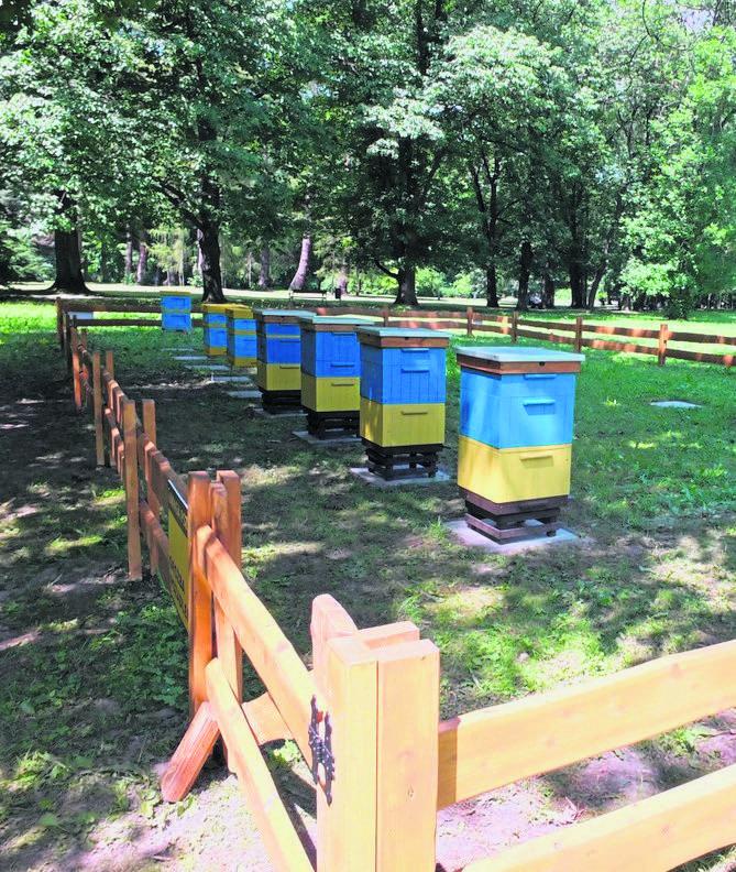 Klasa pszczelarska powstała w Zespole Szkół Agrotecznicznych i Ogólnokształcących w Żywcu