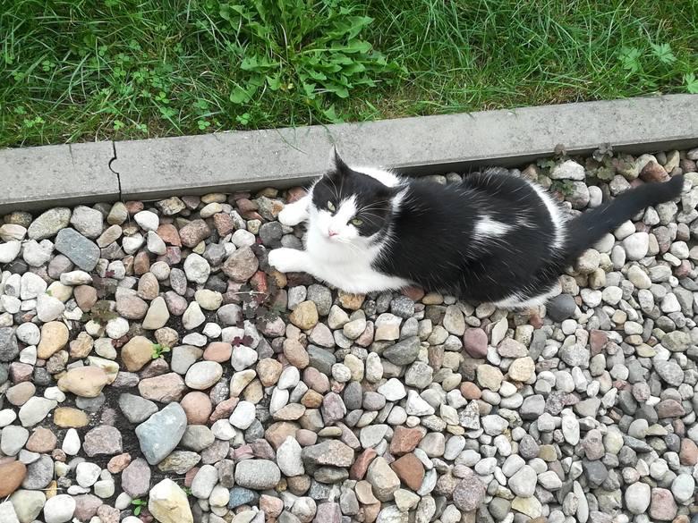 Kicia ma 6 lat i biało-czarne futerko. Jej cechą charakterystyczną jest biała plamka na grzbiecie (widoczna na zdjęciu). Kotka jest wysterylizowana.