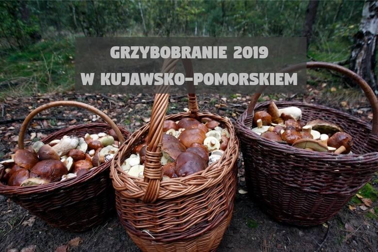Koziki i wiklinowe koszyki czekają - amatorzy grzybów szykują się na łowy.Grzybiarze z reguły nie dzielą się swoimi ulubionymi lokalizacjami, ale kilka