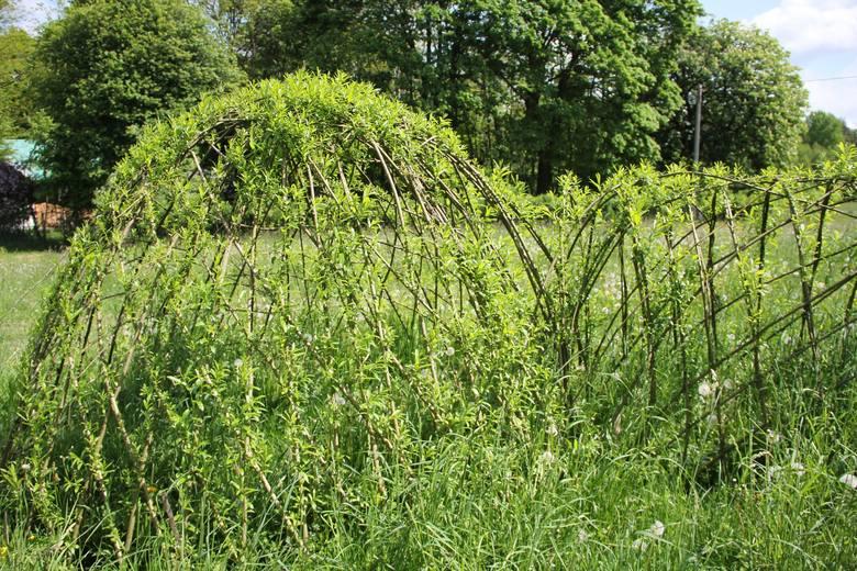Zielone, żywe konstrukcje stają się naturalną częścią ogrodu. Mogą być miejscem wypoczynku, zabaw, dzielić ogród czy służyć jako osłona.