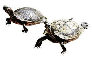 Dżdżownice i żółwie podbijają kosmos
