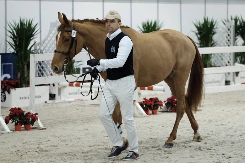 Cavaliada 2017 - zobacz najpiękniejsze konie ras szlachetnych [ZDJĘCIA]