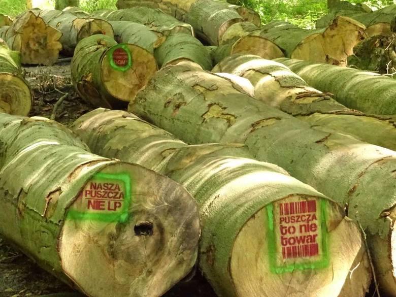 Razem dla Puszczy Bukowej i lasów