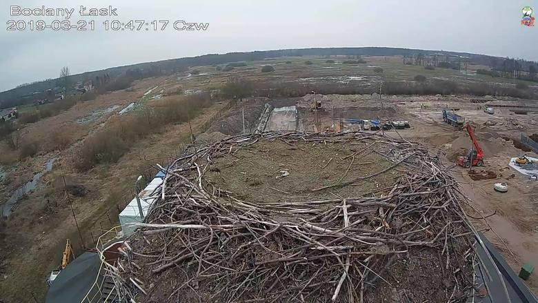 Bociany z Łasku znów można podglądać przez kamerę. Ruszył przekaz z bocianiego gniazda!