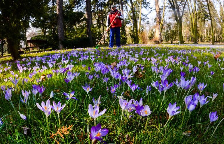 Pszczółki, kwiatki, motylki... Wiosna coraz bliżej i coraz bardziej daje o sobie znać. Nie wierzycie? Wystarczy pójść na spacer do Ogrodu Botanicznego