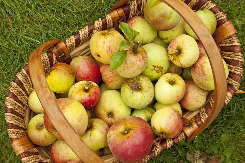 Dieta jabłkowa wymaga jedzenia dużych ilości jabłek - warto, by były to owoce ekologiczne lub z naturalnych upraw, najlepiej prostu z sadu, a nie - z