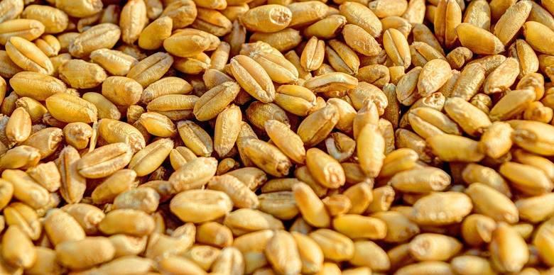 Ceny pszenicy rosną, bo zapotrzebowanie na rynku jest duże. Wpływ na sytuację ma koronawirus