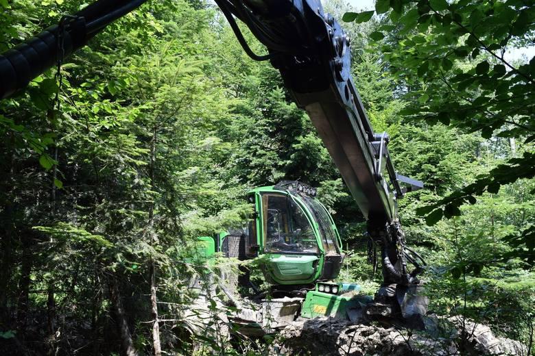 Harwester wycina drzewa w Nadleśnictwie Krasiczyn. Ekolodzy alarmują: Tak niszczy się środowisko! [ZDJĘCIA, FILM]