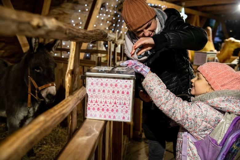 Bożonarodzeniowa szopka na Rynku Kościuszki przyciąga zainteresowanie mieszkańców. Szczególnie cieszą się z niej najmłodsi (ZDJĘCIA)