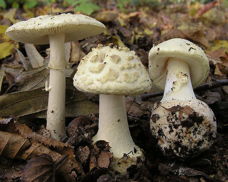 Grzybobranie 2019. Mapa grzybów w Lubuskiem. Gdzie zbierać? Jak rozpoznać jadalne grzyby? Co robić w przypadku zatrucia? [MAPA]